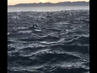 I've never seen so many dolphins at once.