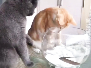 Do not touch my fish, I've seen it first