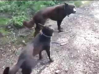 What obedient and smart dogs