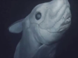 Ghost sharks? Pretty amazing creatures