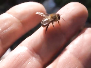 Don't slap that bee! Give 'em time to work free!