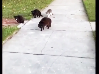 Poor kiddo tried to make friends with a bunch of Angry Cats.