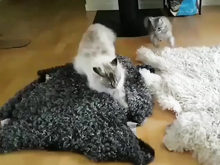 This is the best breakdancing cat I've ever seen.