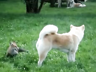A little brown fox quick  jumps over the lazy dog.