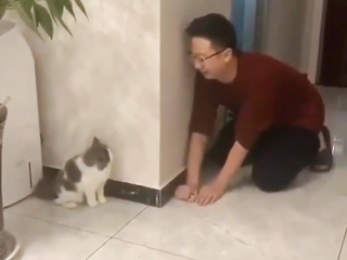 Cats that have good playtime with people are happy cats.
