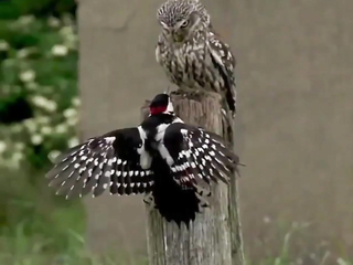 """The bird Version of """"get off my lawn"""""""