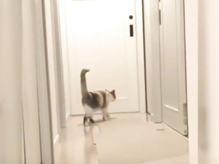 Cats are simply incredible