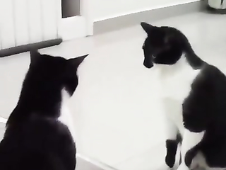 Wait For It.. I thought it was going to do a surprise turn and attack itself.
