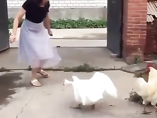 And the cockerel knows Kung Fu perfectly
