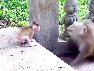 Gentle monkey mom makes a cute face for her baby
