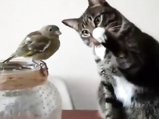 This cat is broken. A normal cat would jab that bird without hesitation lol