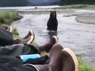 Bear Thinks - why they don't run