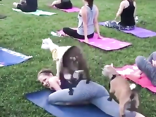 What is the point of goat yoga? Look this video