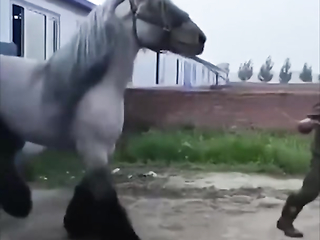 What a handsome horse