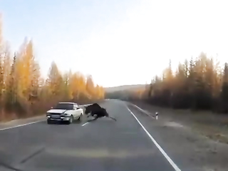 Well, the Elk pulled the handbrake in time