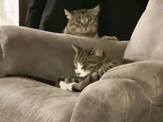 Quietly came, quietly left. funny cats