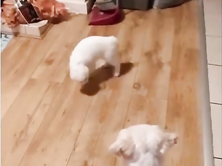 Kung fu cat - White cat tango, It is a masterpiece