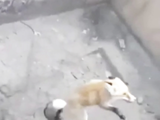 Very clever fox. She realized that she had to grab onto that rope to pull her out