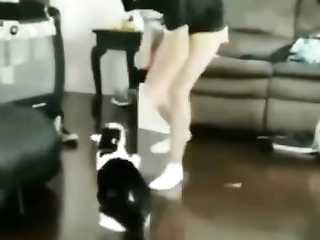 cat and girl boxing
