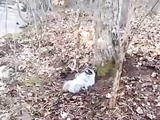 Raccoon knows a lot about rest