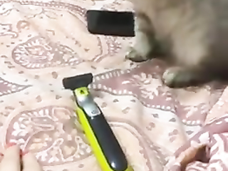 lol what a jump little kitten, funny video