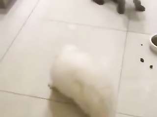 Scary hairstyle. Poor white cat got so scared...