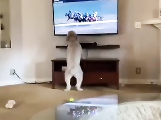 Wait for me horses I am a Horse too