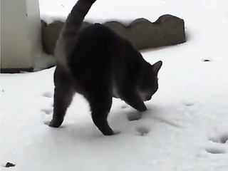 Cat and first snow
