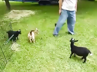 So cute and so Happy Little Goat.