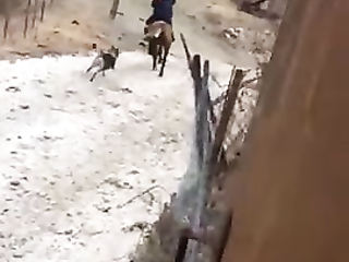 That brilliant cat should be taken to horse racing area