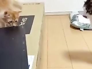 Cats fighting with new enemy.