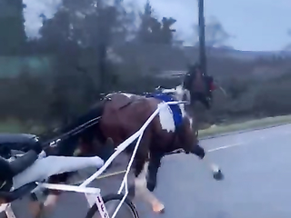 That's a lot of Pure Horse Power.