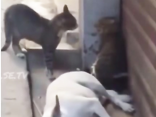 Cats Scared Poor dog lol