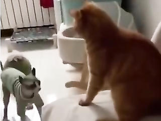 MMA Cat Fight of the year!
