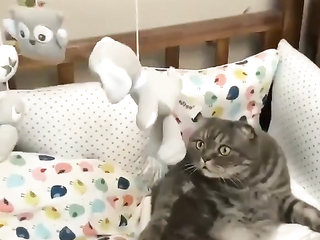 Funny cat reaction LOL. Really in awe mode.