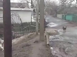 It's better to Bark with Safety.  Funny dog