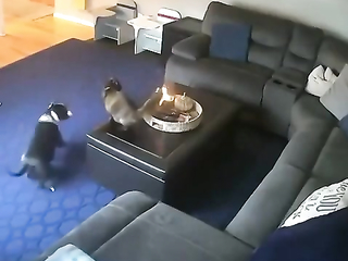 He was probably more surprised than it hurt him