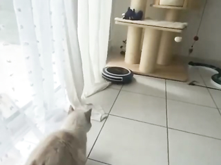 How do cats do that? So smooth. Like pressing a button.