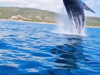 Whale Popular Science Encounter ocean humpback whales, whale jumps.