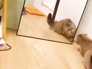 Calm down kitty it's just your reflection LOL.