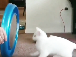 Cat is already crazy after that