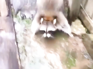 The way he jiggles lol. A raccoon with the soul of a dog .
