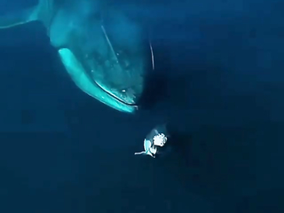 Interaction between a giant Fin Whale and a tiny Dolphin.