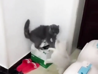 Kitty combat at its finest. I would pay to watch the whole fight lol.