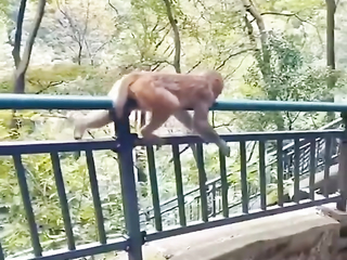 They are just like curious OMG! Lol! He's just monkeying around.
