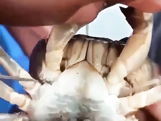 That is very cool, I had no idea that crabs did that