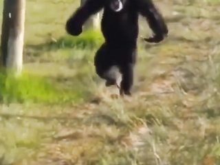 That's one fast ape LOL.