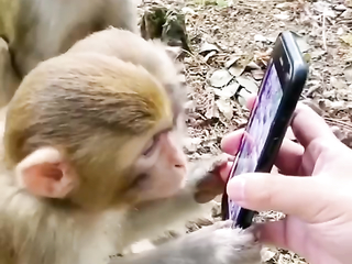 Amazing how you can see the monkey nutting it out.